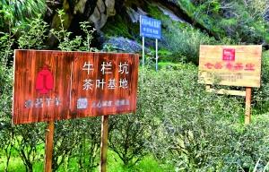 新华社:告诉消费者2.9万一公斤牛栏坑肉桂茶是如何被炒出来的