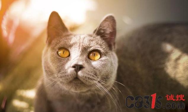 爱猫的河南人 投资猫和老鼠被骗的血本无归