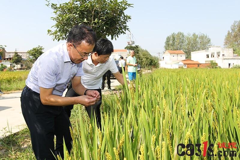 本网关注农民水稻欠收 潢川县政府召开水稻工作会助农维权